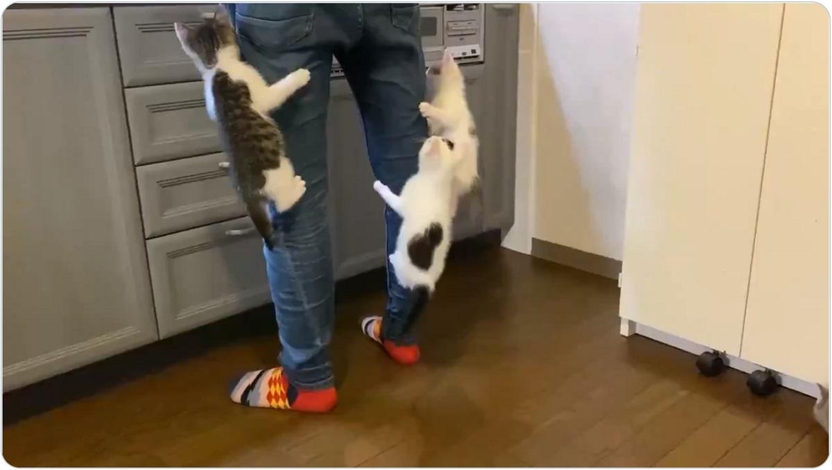 「まだ?まだ?」ご飯を待てない子猫たちが飼い主の足にジャンプ!