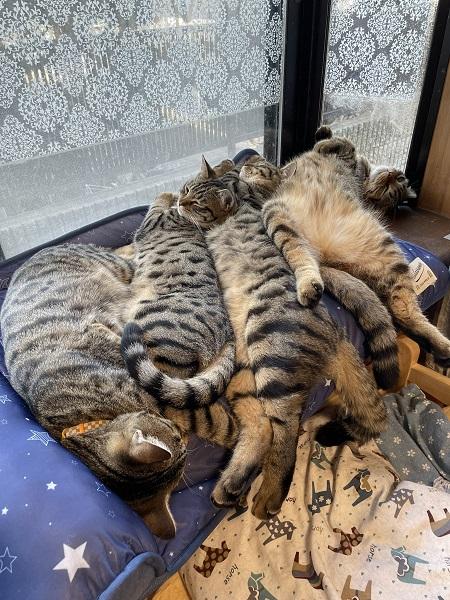 愛猫のために冷感マットを購入→逆に暑くなっちゃった?