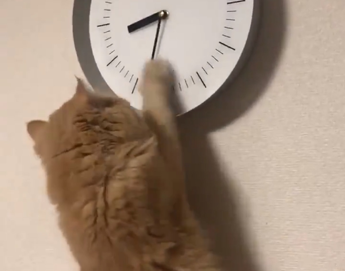 にゃんてこった!時間を操る猫にビックリ