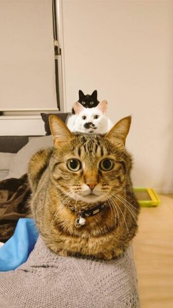 猫の上に小さい猫?きれいに並んだ3匹の猫がまるでトリックアート