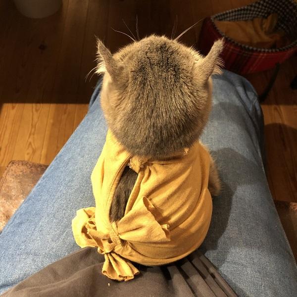 エリザベスカラーが苦手な愛猫 飼い主の手作り術後服に大満足