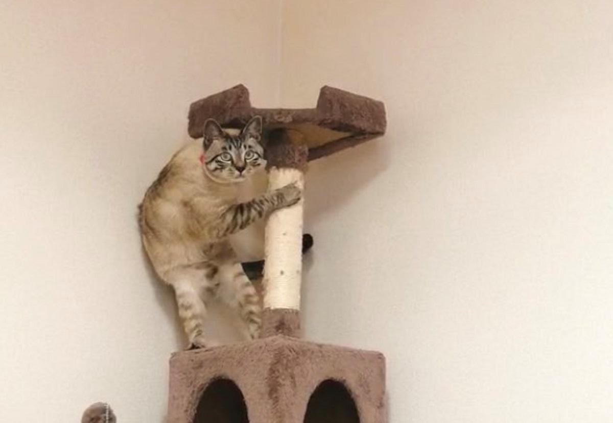 ビビりすぎてへっぴり腰になった猫 掃除機は敵だニャ……