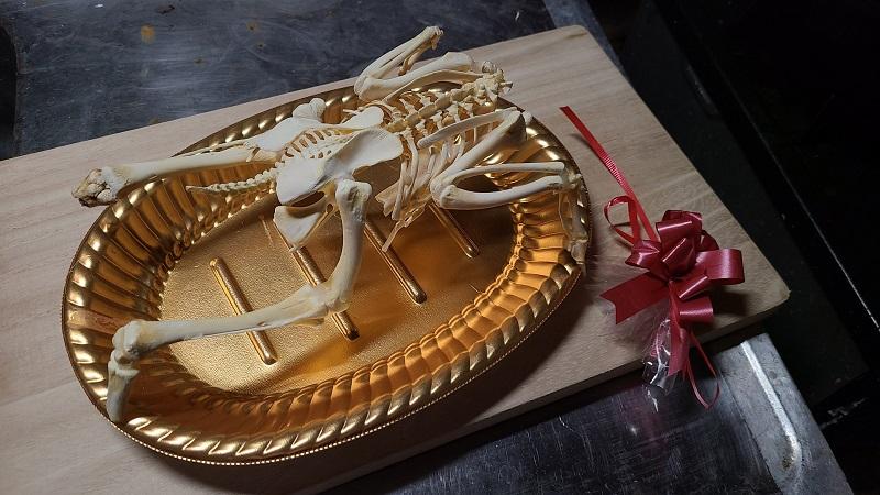 ローストチキンの骨格標本