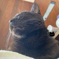 猫に枕を奪われた人間の視界が絶景だった