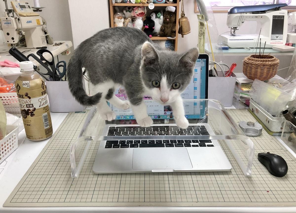 PC作業中キーボードに乗ってくる愛猫 防止用にモニター台を買ったが……
