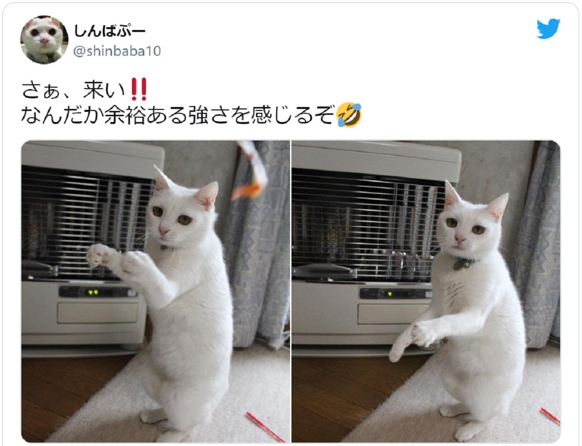 画像提供:しんばぷーさん(@shinbaba10)