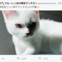 本当に「起こしに来た」だけ?目つきのするどい子猫にびっくり