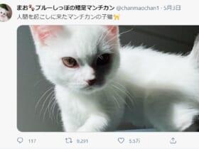 本当に「起こしに来た」だけ?目つきのするどい子猫にびっくり