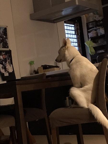 飼い主びっくり「朝5時から朝食を待つ犬」がまるで人間のよう