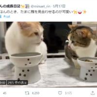 「おいしいニャ!」「だよニャ!」顔を見合わせて食事する猫にほっこり