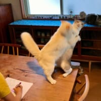 目の前で猫が大乱闘…… スルースキルの高い子ども…
