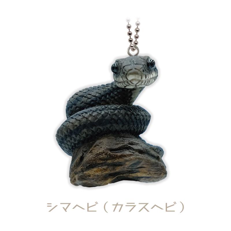 シマヘビ(カラスヘビ)