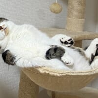 可愛かった子猫の1年後……貫禄たっぷりのふてぶて…