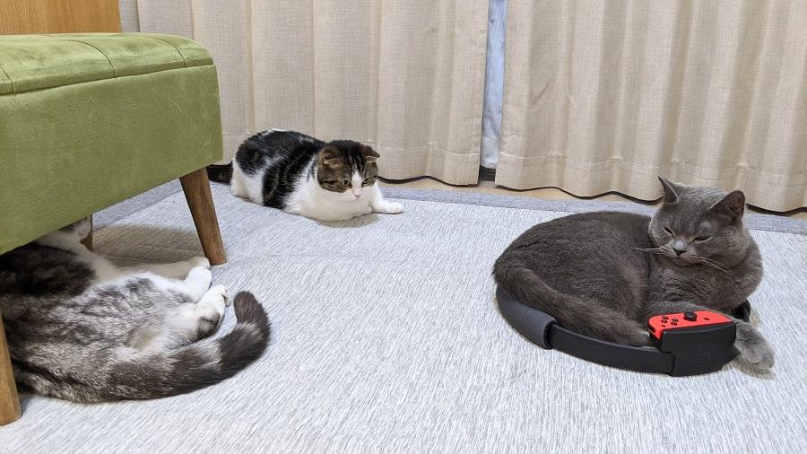 順番待ちする猫たち