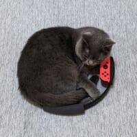 話題のゲームと猫が融合 これが本当の「リングフィット」