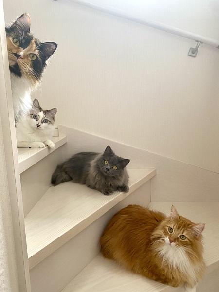撮られ方を知ってる? 階段の使い方が完璧すぎる猫たち