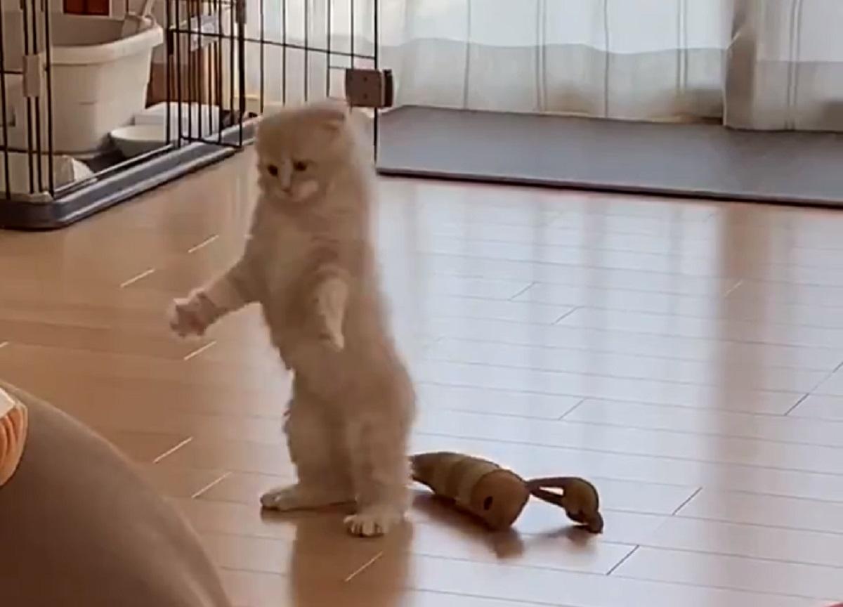 猫の密会現場を目撃 飛び跳ね逃げ出す姿が「アニメみたい」