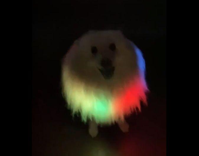 ゲーミングイッヌ! 暗闇で光り輝く愛犬