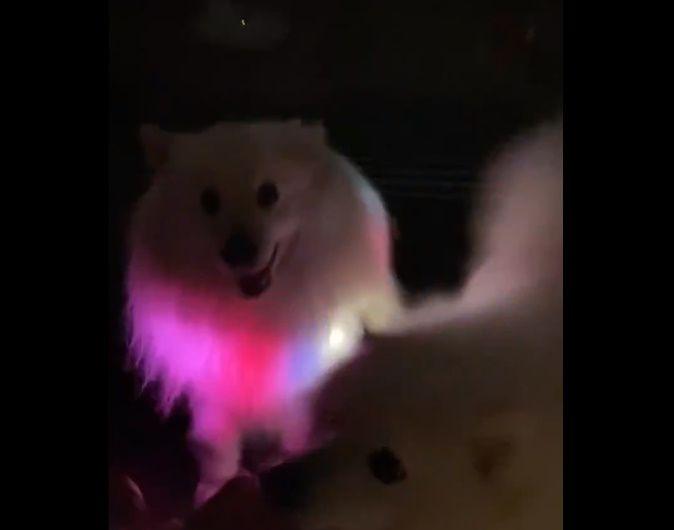 動画の最後はもう1匹の犬らしき乱入者の姿が。