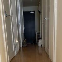 玄関で待ち構える2匹の猫 異世界への通路?セーブポイント?