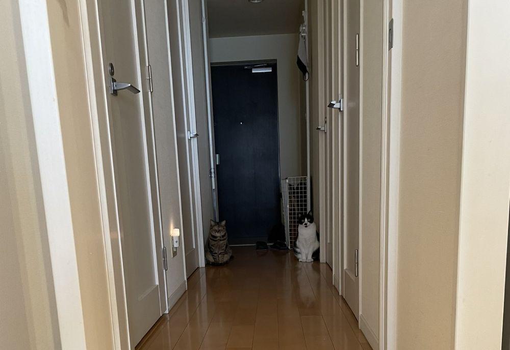 玄関先に写る2つの影(猫)の写した姿がTwitterで話題。