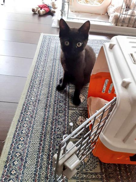 「何か嫌なことされそう!」初めての注射で何かを察した子猫の表情