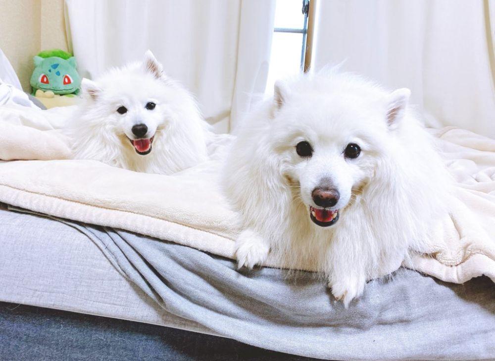 生粋の犬好きな飼い主は、小太郎くんと小鉄くん2匹の犬と暮らしています。