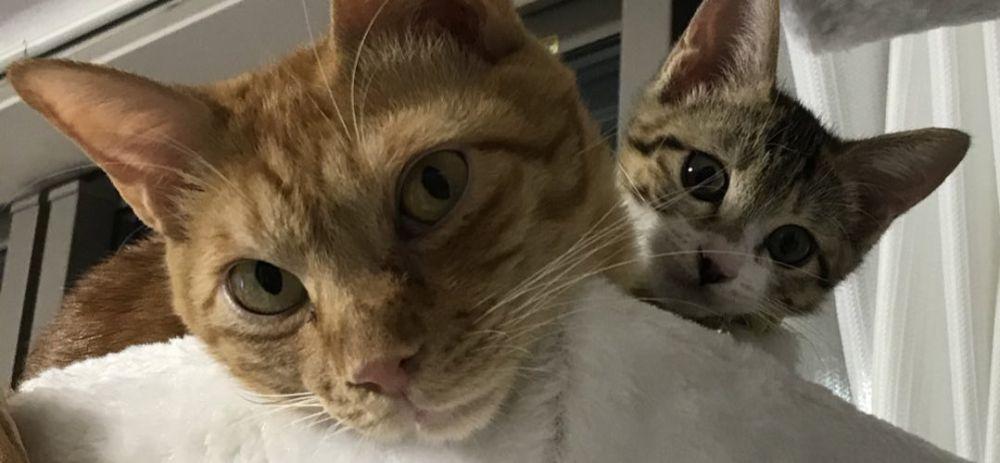 飼い主宅では、「妹猫」のふくちゃんも暮らしています。