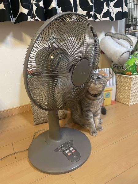 取材中の際も扇風機に夢中になっていた凛太郎くん。