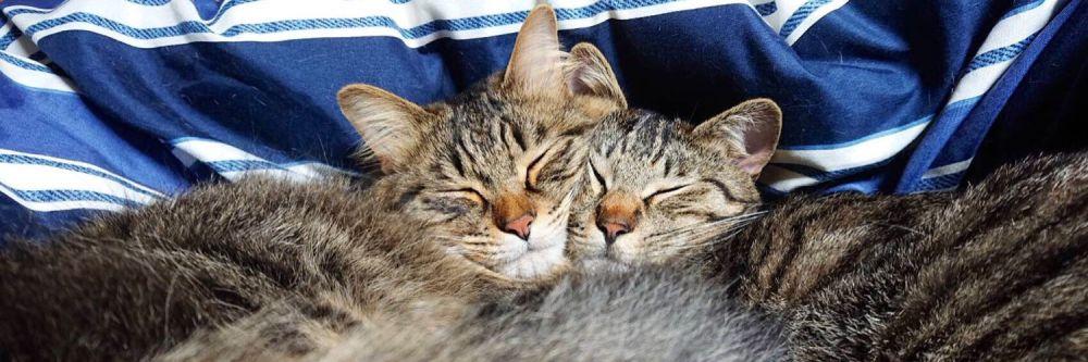 元保護猫のとらちゃんと甘ちゃんという2匹の猫とも一緒に暮らしている飼い主。