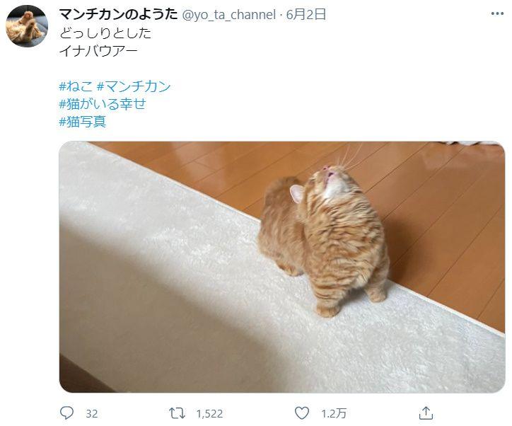 これはニャンメダル 愛猫が披露した華麗なイニャバウアー