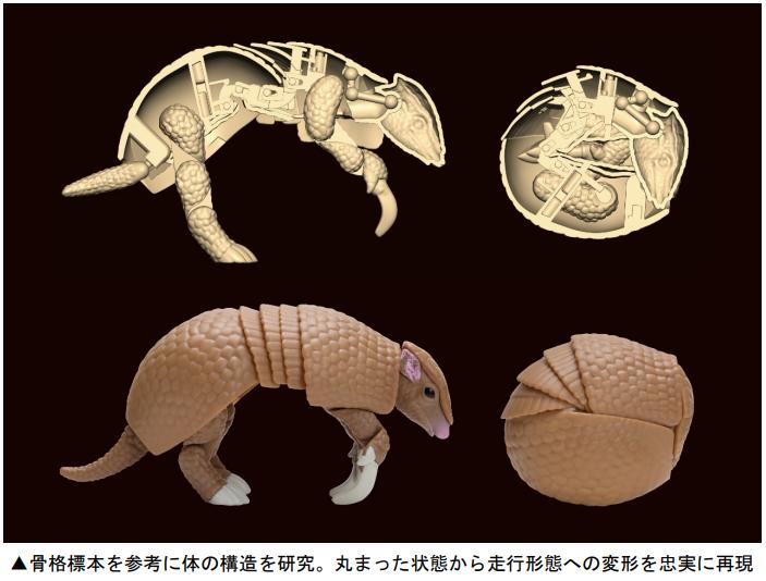 「ミツオビアルマジロ」の体の構造を徹底研究