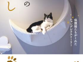 猫マスター響介さんの猫ファーストな家づくり本「下僕の恩返し」