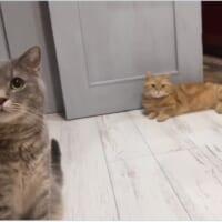 人間の言葉を完全に理解している猫 「ご飯」に即反応
