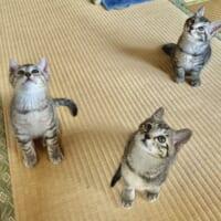 可愛いが爆発!下を見たら猫パラダイス