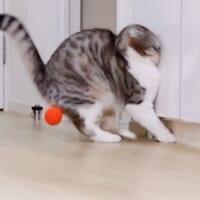 アニメみたいにぶつかる猫 「ドーン!」という効果…