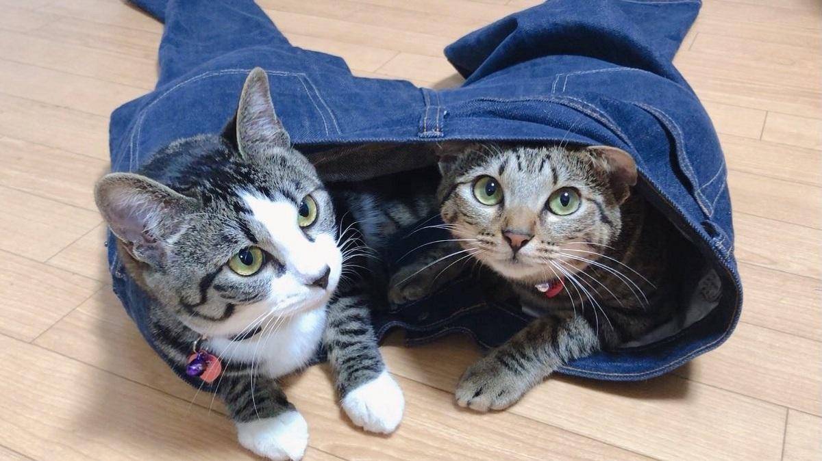 2匹の愛猫が秘密基地に選んだ場所は……飼い主のジーンズ?