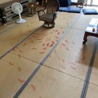 事件現場?畳に残された赤い足跡……子どものいたず…