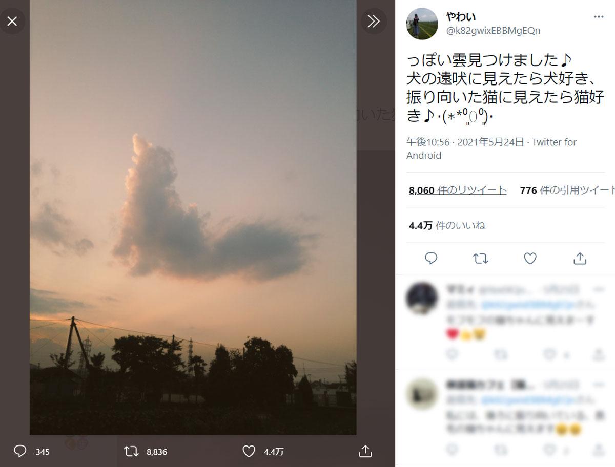 犬?それとも猫?人によって見え方が変わる不思議な雲
