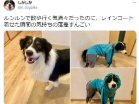 レインコートを着る前と後 表情の落差がすごい犬