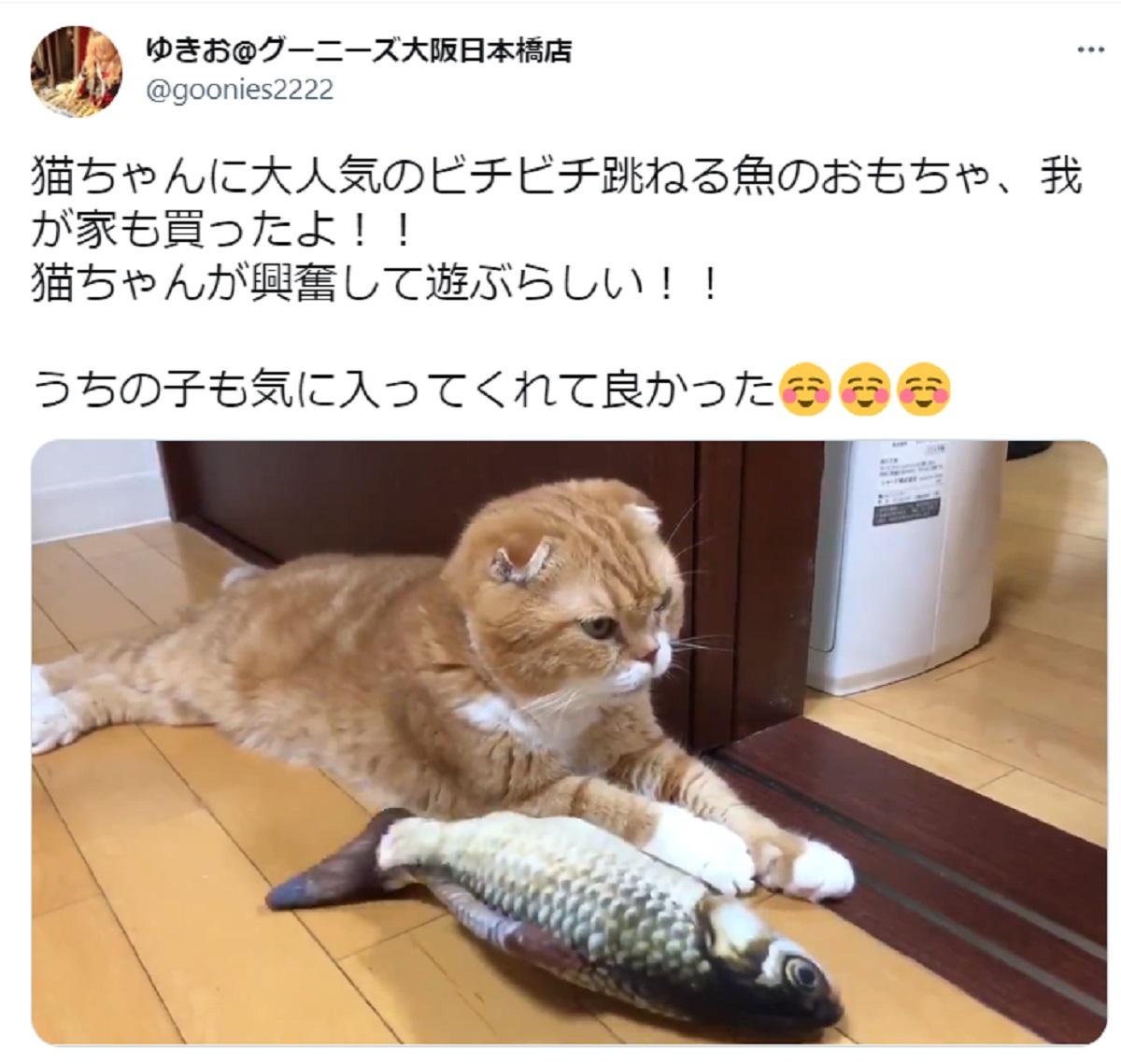 「これぞ塩対応」ビチビチ跳ねる魚のおもちゃに全く興味を見せない猫