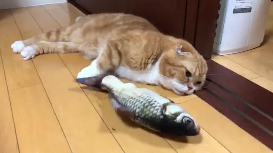魚のおもちゃに全く興味を示さないきのこくん