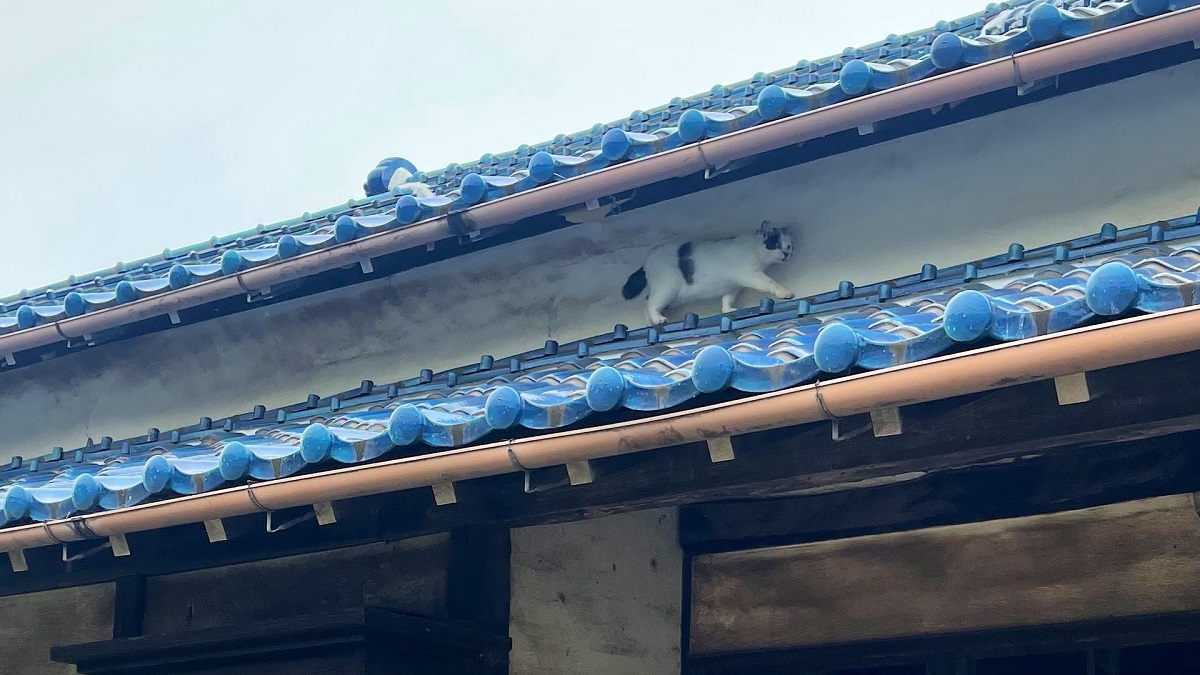 壁の汚れが奇跡的 猫が屋根の上を猛スピードで移動?