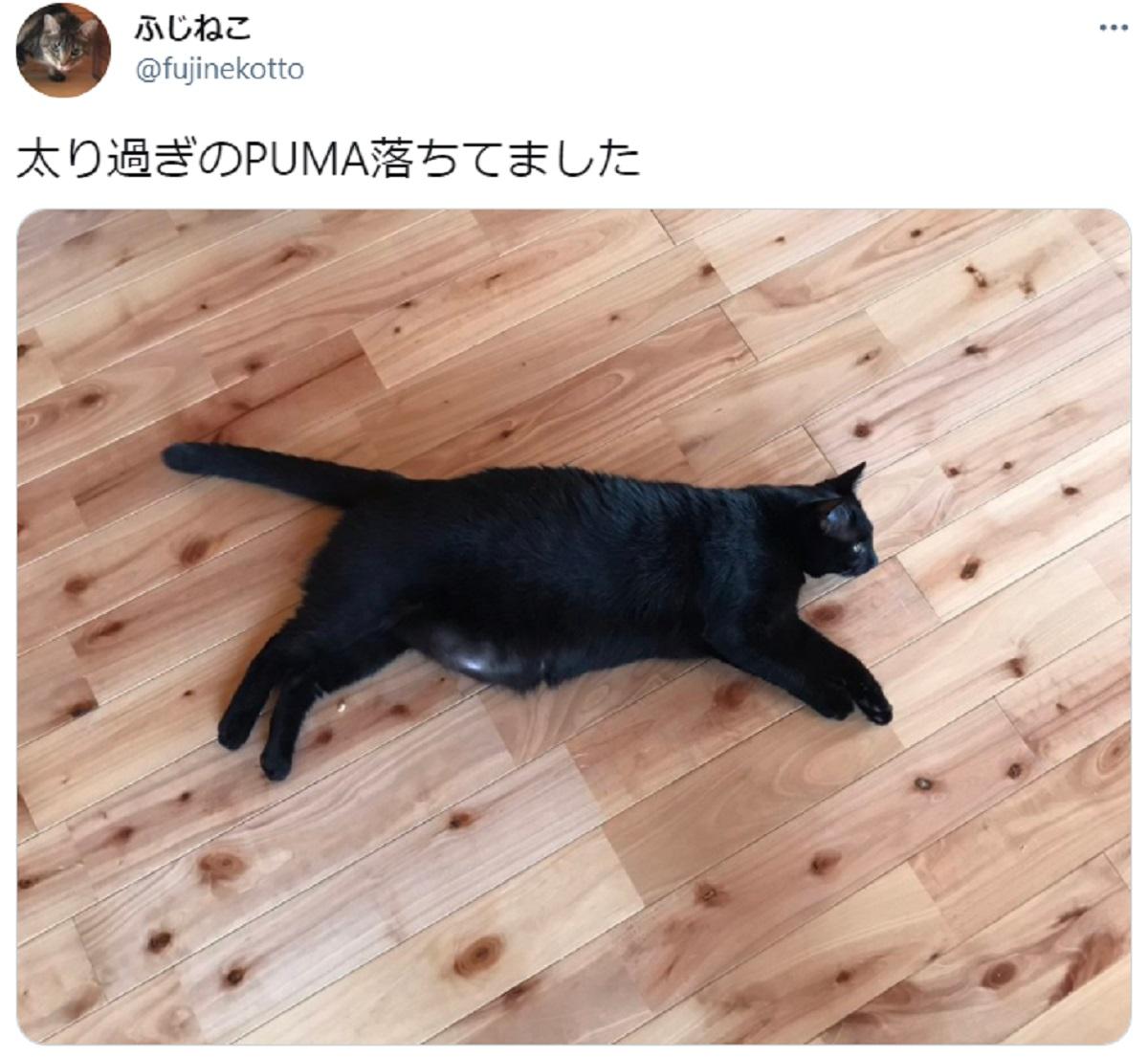 スポーツブランドのロゴっぽい 愛嬌たっぷりのぽちゃ猫が落ちてました