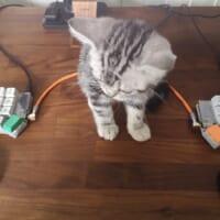 左右分割型のキーボードの意外なメリット 猫飼いに…