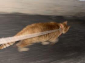 「いそげ~!」散歩から帰宅中の猫が醸し出す疾走感に驚きの声