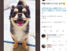 画像提供:たまゆんさん(@tamayun54)