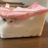 発酵中のふわふわ猫さん 箱入り姿はまるで白パン?