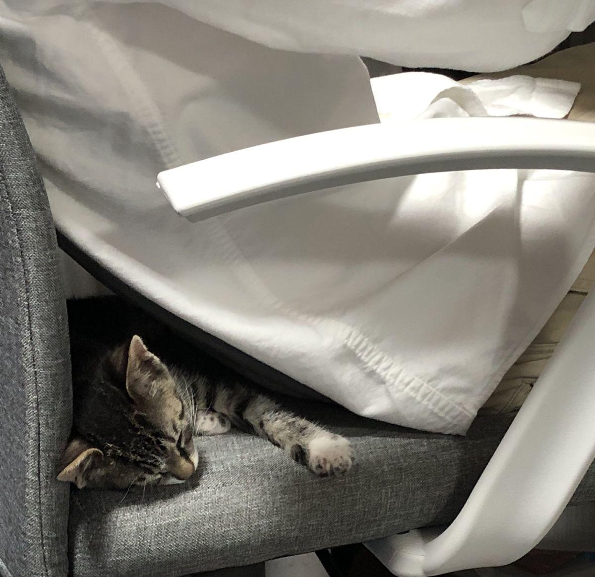 疲れたら仕事中の飼い主の夫の背中で眠りにつくのがお気に入りなごまちゃん。
