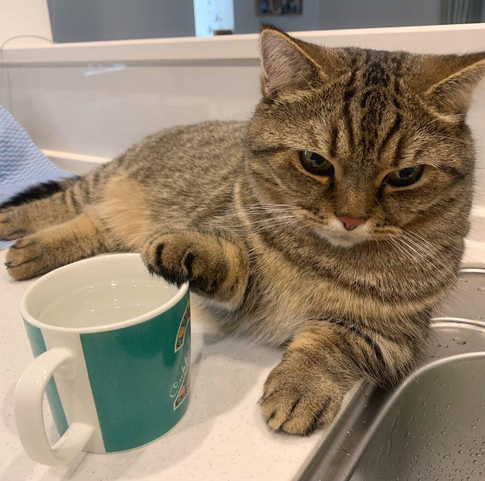 愛猫に水をすすめたつもりが逆に「一杯どう?」 ほほ笑ましい立場逆転の一枚